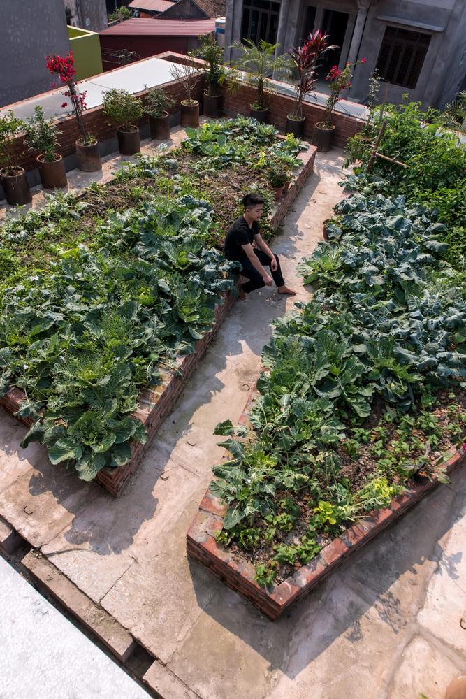 Khu vực trồng rau ở tầng 5.