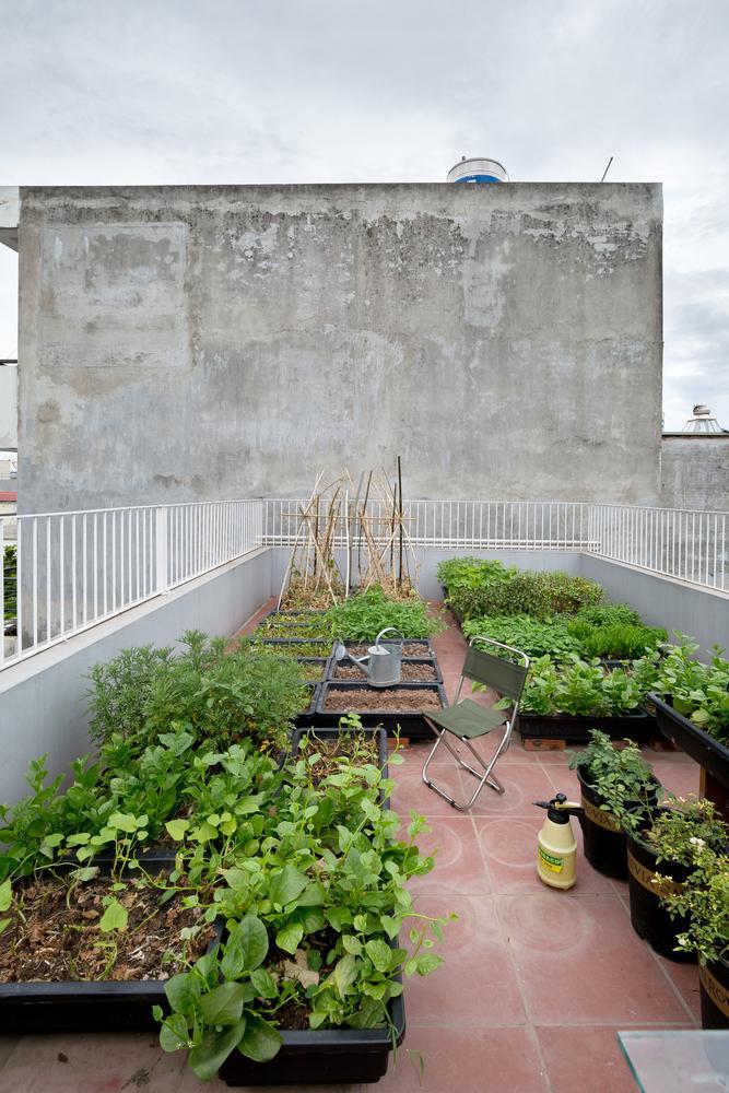 Sân thượng được tận dụng để trồng rau.