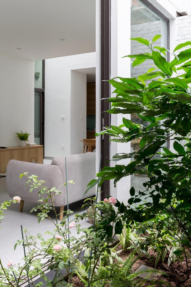 Các loại cây cối, thực vật được trồng quanh ngôi nhà